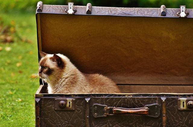 kočka v kufru